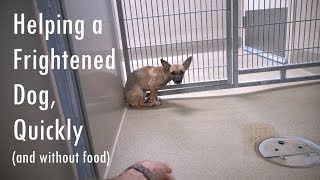 Helping a Fearful Dog, Quickly (and without food)