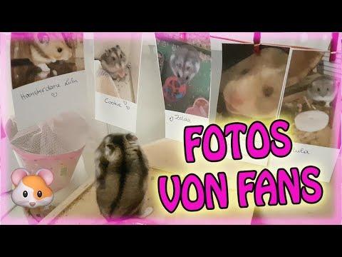 François live ❤ Fotos von Fans