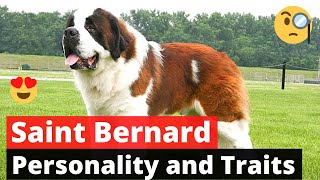 Saint Bernard: Why you Should (or Shouldn't) get this Dog breed?