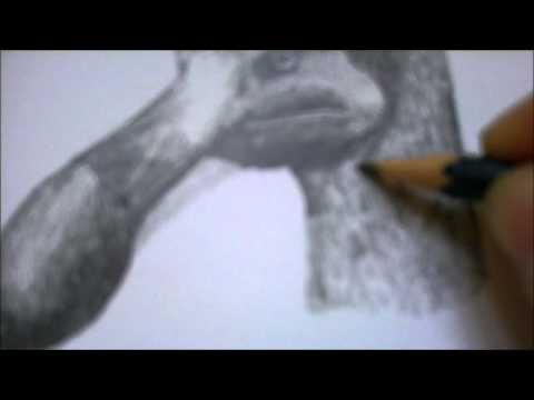 Drawing Dodo - Animal Drawings
