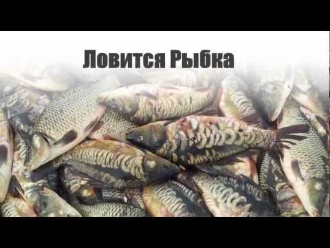 видео: Кокшетау рыба