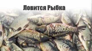 Кокшетау рыба