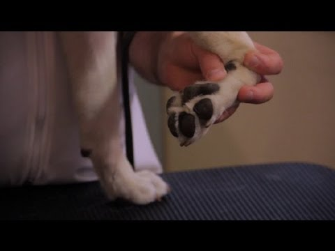 How To Sooth Pink Irritated Dog Paws Pet Health