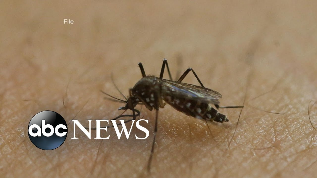 Index: 3 People From the NYC Area Test Positive for the Zika Virus