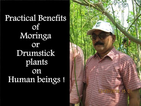 Practical Benefits of Moringa or Drumstick plants