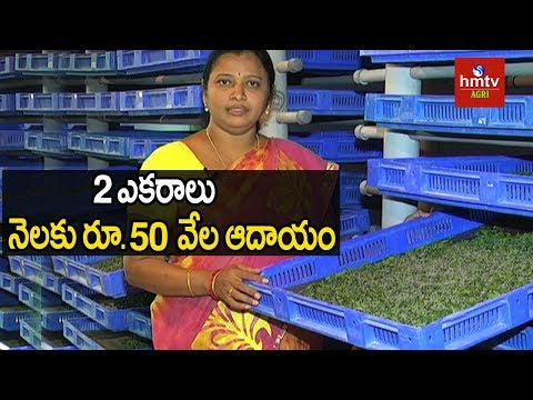 Sericulture & Silk Worm Rearing Success Story | Mulberry Cultivation | Hmtv Agri