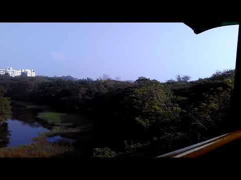 Kranji mysore solitaire lush green wild life lake