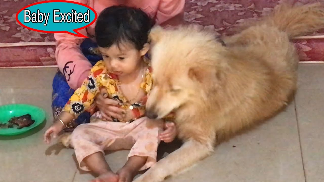 My Cute Baby Excited To Helping My Pregnant Wife To Feed Dog||Cute Baby ||Dog Protecting Baby.