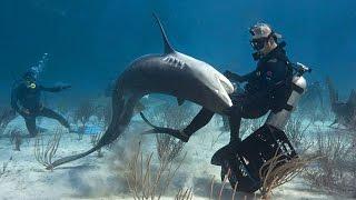 Balık Saldırınca Discovery Channel