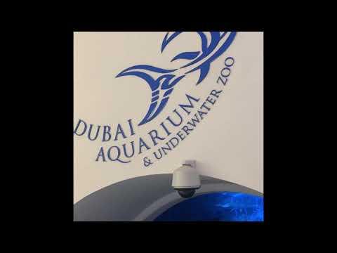 Dubai Aquarium and Underwater Zoo – 2021 Dubai Mall