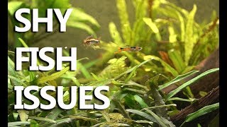 How to make small fish less shy