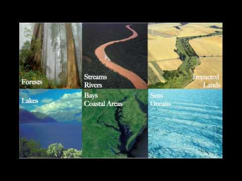 Global nitrogen pollution: nitrate build up from soils to the sea (by Philip Taylor)