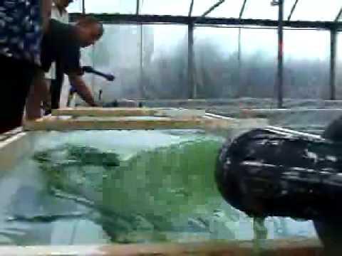 Spirulina Algae Micro Farm: La Capitelle