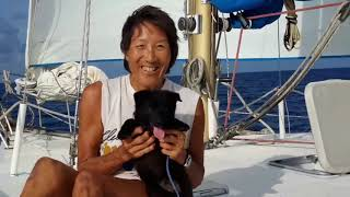 Sailing Schipperke puppies from toddlers to teens