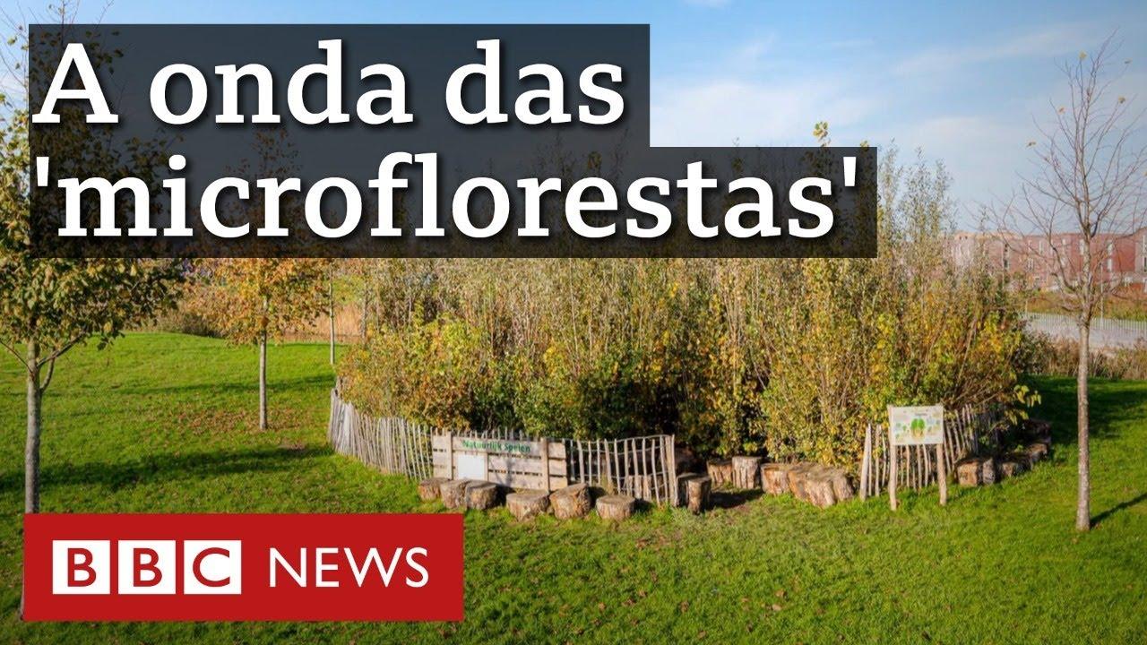 O que são as 'microflorestas' que estão surgindo no mundo