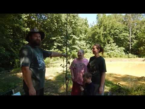 Planting Our Bartlett Pear Tree