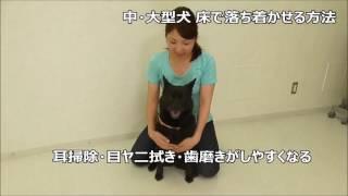 中・大型犬を床で落ち着かせる方法を説明しています。 落ち着かせる方法...