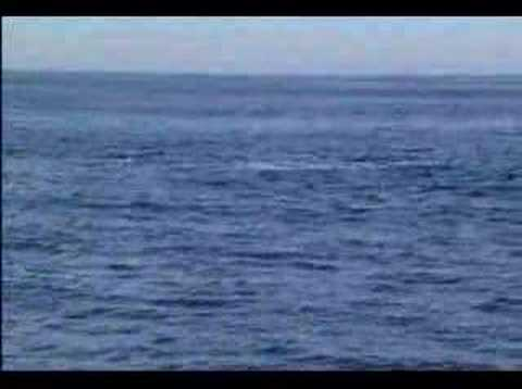 North Atlantic Right Whale Sighting