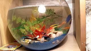 Петушок. Рыба петух.  Взрослые игрущки