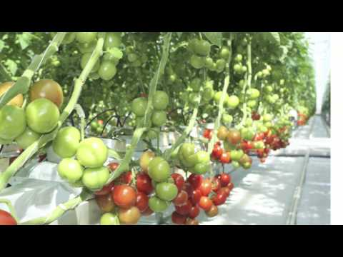 HOME TOWN FARMS®.. Vertical Organic Urban Farming
