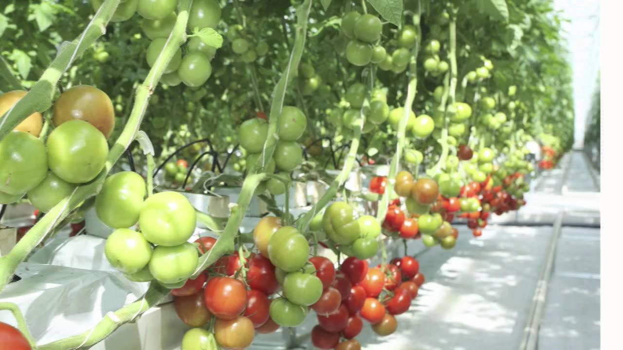 Home Town Farms 174 Vertical Organic Urban Farming Youtube