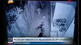 Download Video www.pojokpitu.com : Maling Sapi di Probolinggo Terekam CCTV MP3 3GP MP4