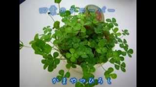 かまやつひろし - 四つ葉のクローバー(バックはデビュー前のGARO) 四つ葉のクローバー 検索動画 4