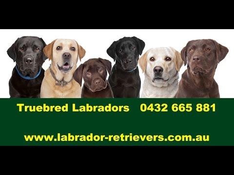 Dog Breeders NSW 0432665881
