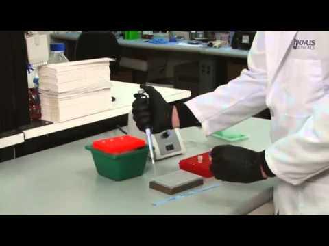 Chromatin Immunoprecipitation Visual Protocol  Phase 5