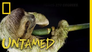 Happy Sloth Day, Celebrate with These Slow Movers! | Untamed