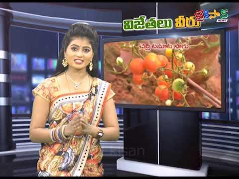 పాలీహౌస్ విధానంపై స్పెషల్ స్టోరీ | Sparsh Bio Polyhouse (Cherry Tomato's) | JaiKisan News
