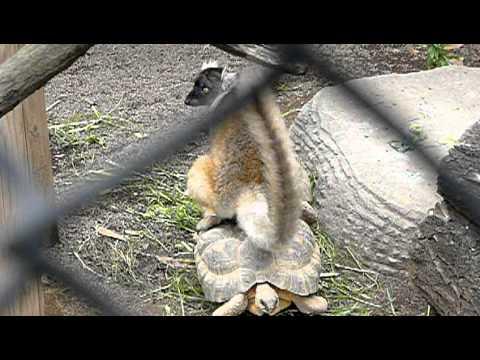 菜っ葉を必死に引っ張ろうとするハダカデバネズミ!   by capipiro