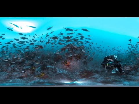 360 diving Bay of Islands and Canterbury Wreck