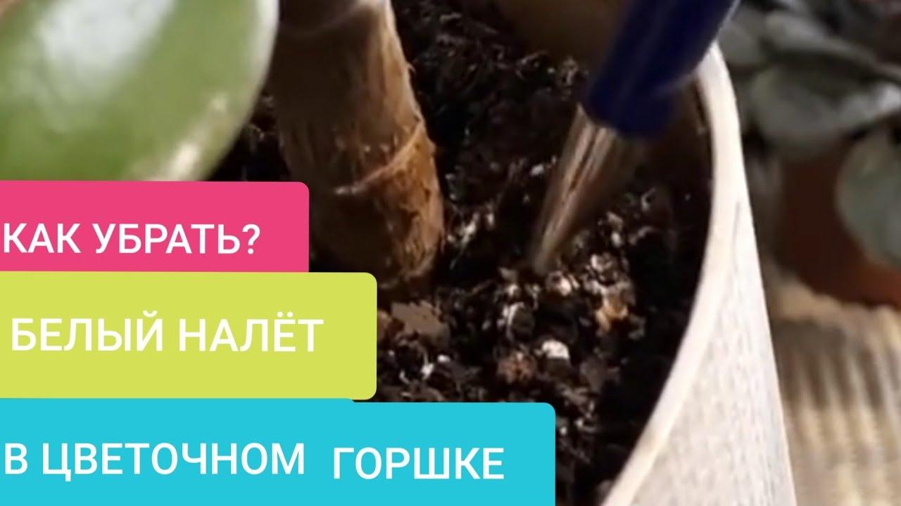Как убрать БЕЛЫЙ НАЛЕТ и ПЛЕСЕНЬ в цветочном горшке?