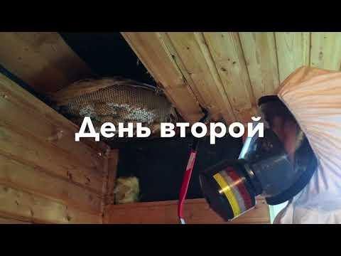 Вопрос: В потолке домика на даче поселились осы. Что делать Как выгнать?