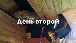 видео Гнездо шершней