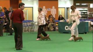Dfs Crufts 2011  - Best Of Breed Dachshund (min Smooth-haired)