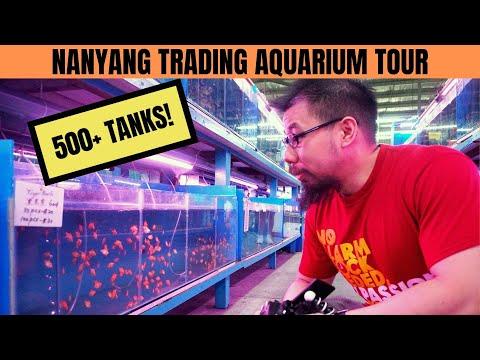 SINGAPORE FISH STORE TOUR | 500+ Tanks! (Nanyang Trading Aquarium) Part 1