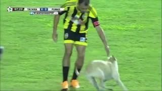 Очень довольная собака на футбольном поле