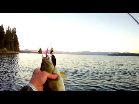 Lake Almanor Smallmouth Bass Fishing In Float Tube