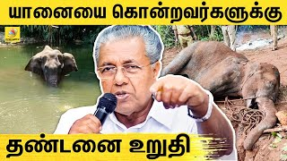 Kerala Elephant Death Issue   Blue Cross