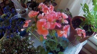 Обзор цветущих комнатных растений в сентябре.