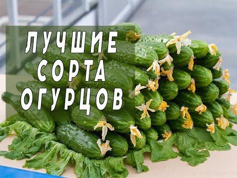 Лучшие Сорта Огурцов.