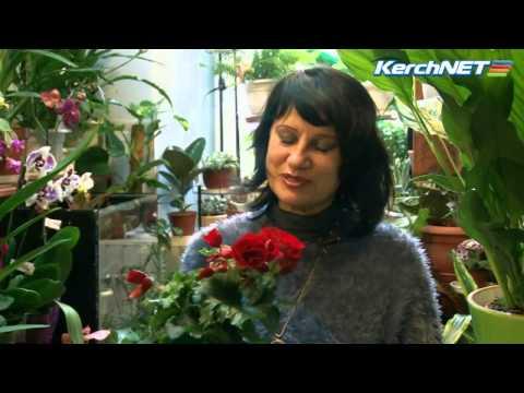 Комнатные_цветы_уход_видео