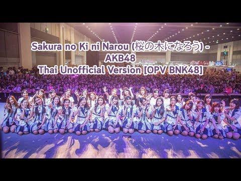 (Fanmade) Sakura no Ki ni Narou - AKB48 Thai Version [OPV BNK48]