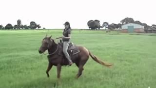 Beautiful Rider On Horse