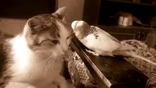 Попугай кошка круть жесть ржака интерны универ физрук вайн 100500 школота юмор с