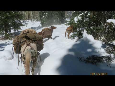 Colorado Elk Hunt 2018 Flat Top Wilderness White River Nat Forest, Meeker CO