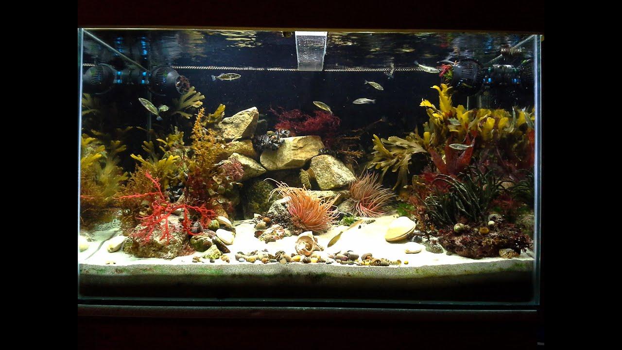 200l native marine irish rockpool aquarium status january for Aquarium 200l