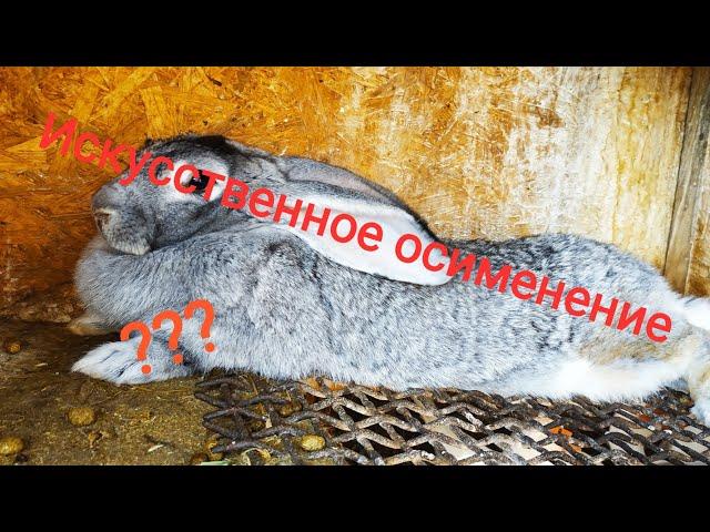 Искусственное осименение кроликов //Жизнь в деревне!!!